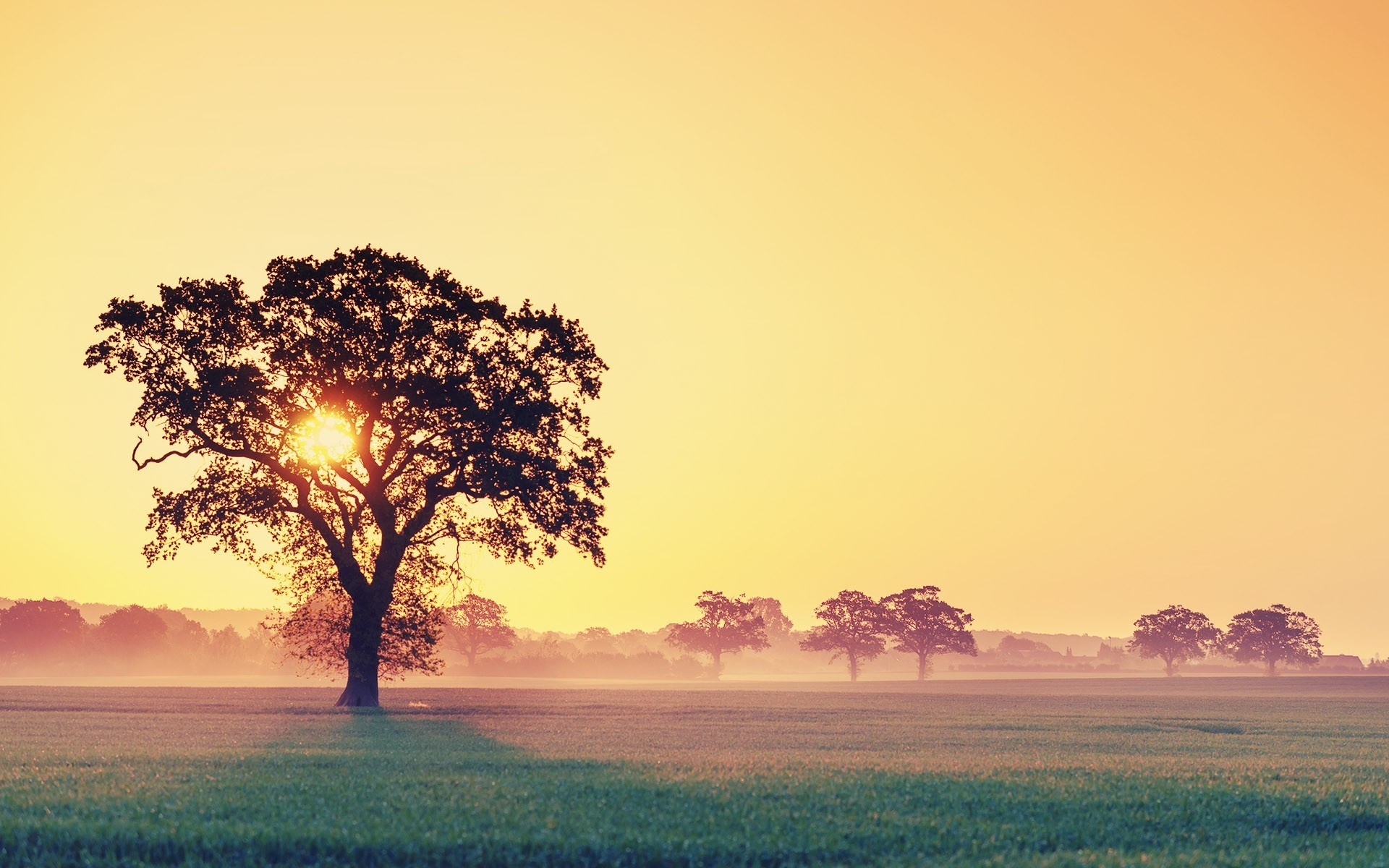 tree-silhouettes-in-the-misty-sunrise-nature-hd-wallpaper ...